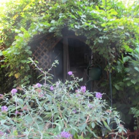 Garden Photos August 2013 011