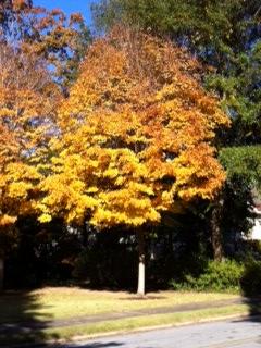 Fall 2014 photo 2