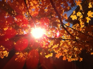 Fall 2014 photo 3