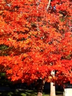 Fall 2014 photo 4