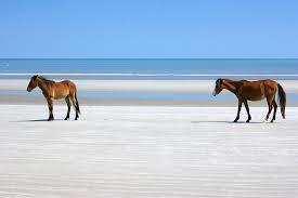 Cumberland #14 Horses on Beach