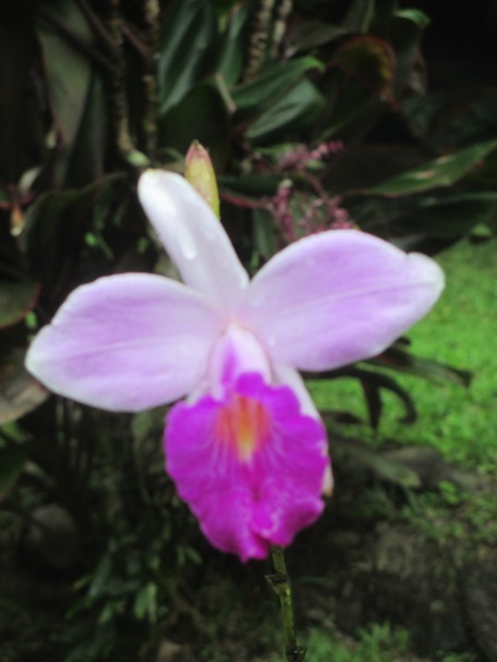 Costa Rica 2015 Camera 009
