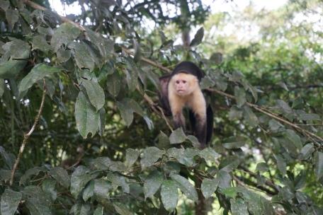 Costa Rica 281