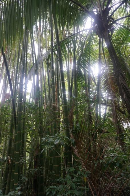 Costa Rica 379