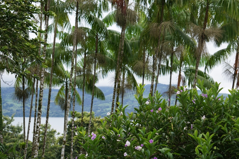 View from Cafe Macadamia