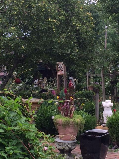 Wytheville Garden 4