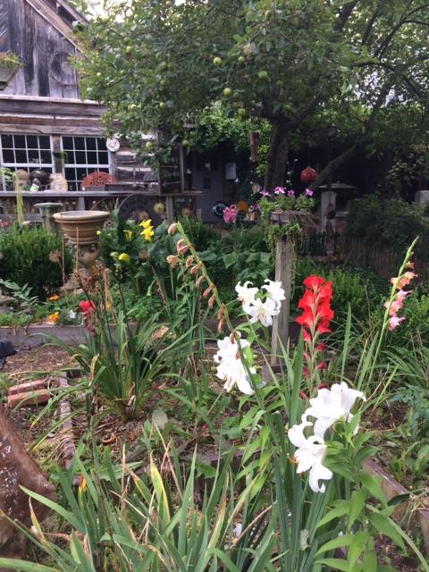Wytheville Garden 7